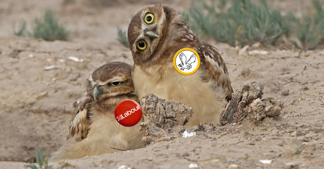 OWL and Labour OWLS